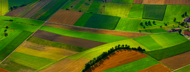 Let's put Policy Coherence for Sustainable Development at the heart of EU Common Agricultural Policy